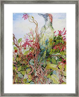 Woodpecker In The Honeysuckle Framed Print by Joan Thewsey