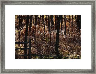 Woods - 2 Framed Print by Linda Shafer