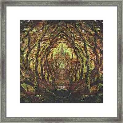 Woods II Framed Print by Fran Rodriguez