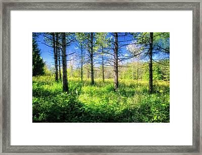 Woods Of Retzer Nature Center Framed Print by Jennifer Rondinelli Reilly
