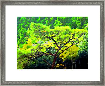 Woods Framed Print by Roberto Alamino