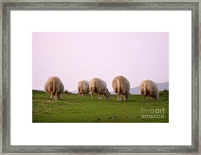 Wooly Bottoms Framed Print by Angel  Tarantella