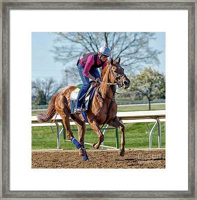 Thoroughbred Workout Framed Print by Catherine Balfe