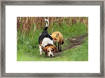 World\\\'s Worst Hunting Dog Framed Print by Mircea Costina