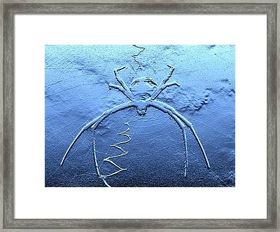 Worldwide Web Framed Print by Al Powell Photography USA
