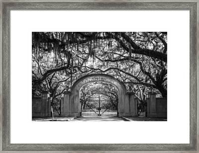 Wormsloe Plantation Bw Framed Print by Joan Carroll