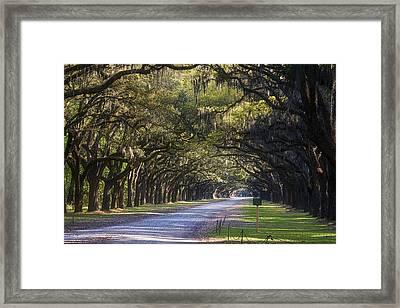 Wormsloe Plantation Lane Framed Print by Joan Carroll