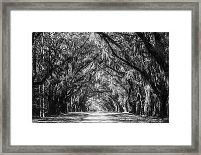 Wormsloe Plantation Oaks Bw Framed Print by Joan Carroll