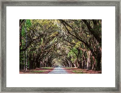 Wormsloe Plantation Oaks Framed Print by Joan Carroll
