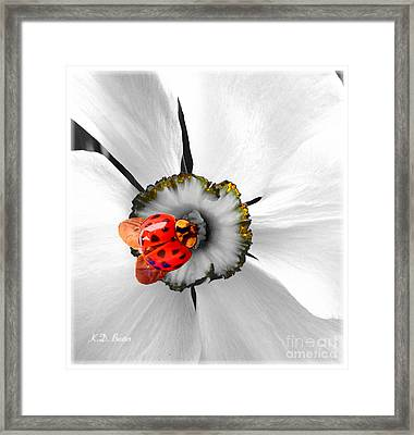 Wow Ladybug Is Hot Today Framed Print by Kimberlee Baxter