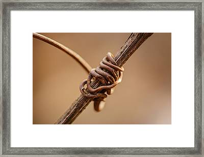 Wrapped Around You Framed Print by Shane Holsclaw