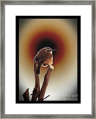 Wren At Sundown Framed Print by Sue Melvin