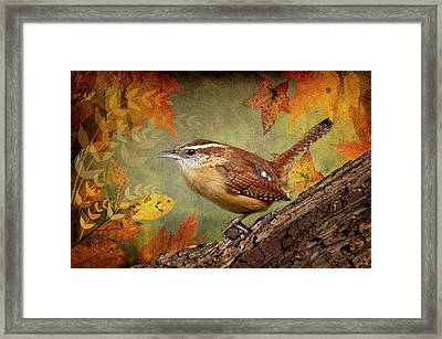 Wren In Autumn  Framed Print by Bonnie Barry