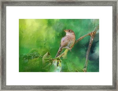 Wren In The Garden Bird Art Framed Print by Jai Johnson