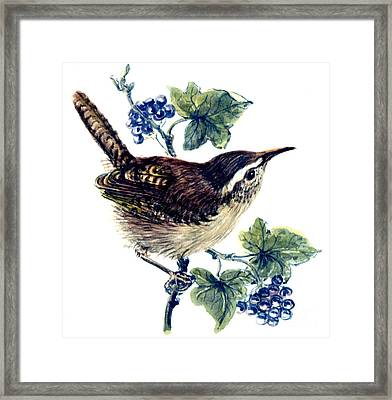 Wren In The Ivy Framed Print by Nell Hill