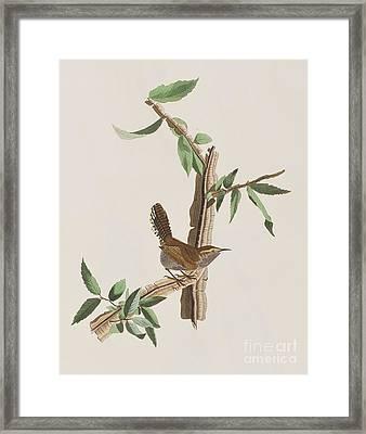 Wren Framed Print by John James Audubon