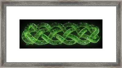 Wyrm - The Celtic Serpent Framed Print by Jules Gompertz