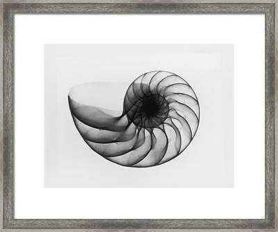 X-ray Nautilus Shell Framed Print by Edward Charles Le Grice