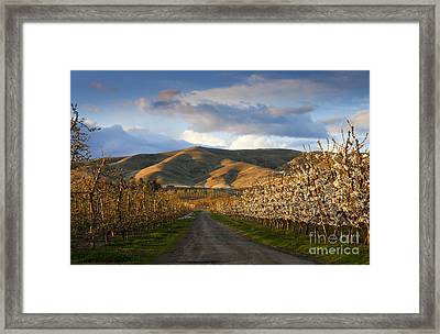 Yakima Valley Spring Framed Print by Mike  Dawson