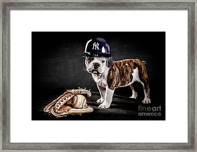 Yankee Bulldog Framed Print by Jt PhotoDesign