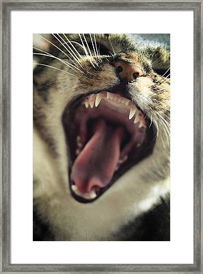Yawning Framed Print by Cambion Art