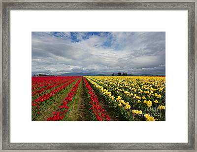 Yellow And Red Framed Print by Mike Dawson