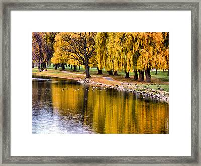 Yellow Autumn Framed Print by Scott Hovind