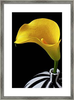Yellow Calla Lily In Black And White Vase Framed Print by Garry Gay