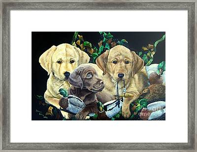 Yellow/chocolate Lab Puppies- They Made Me Do It Framed Print by Daniel Butler