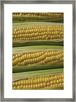 Yellow Corn Framed Print by Garry Gay