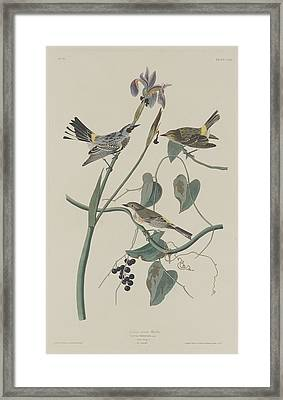 Yellow-crown Warbler Framed Print by John James Audubon