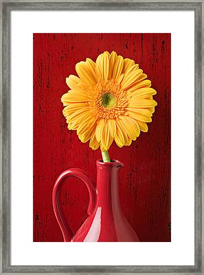 Yellow Daisy In Red Vase Framed Print by Garry Gay