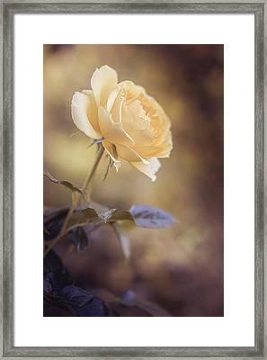 Yellow Dream Framed Print by Cindy Grundsten