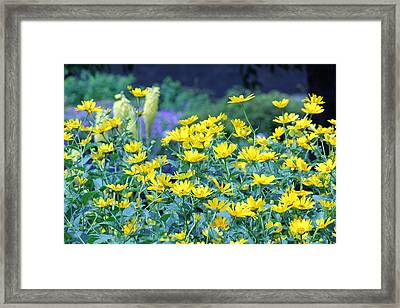 Yellow Everywhere Framed Print by Becky Lodes