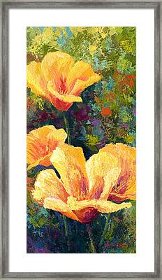 Yellow Field Poppies Framed Print by Marion Rose