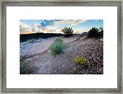 Yellow Flower Sunset, Fort Collins, Colorado Framed Print by Preston Broadfoot