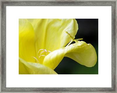 Yellow Flower Framed Print by Svetlana Sewell