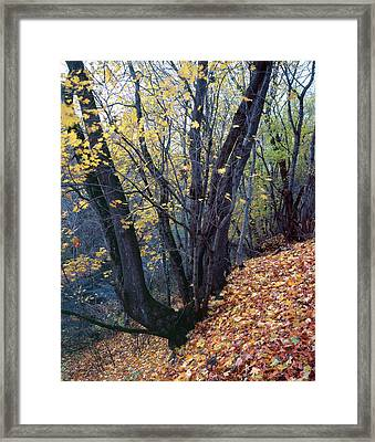 Yellow Forest Floor Framed Print by Romeo Koitmae