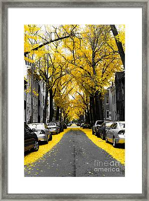 Yellow Gingko Trees In Washington Dc Framed Print by Paul Frederiksen