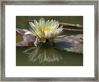Yellow Glory Framed Print by John Lautermilch