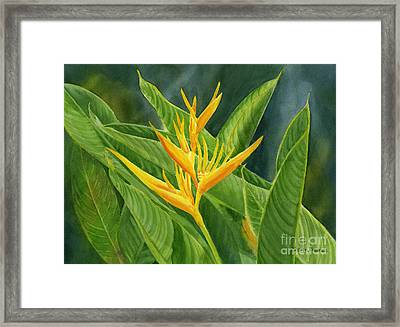 Yellow Heliconia Paradise With Leaves Framed Print by Sharon Freeman