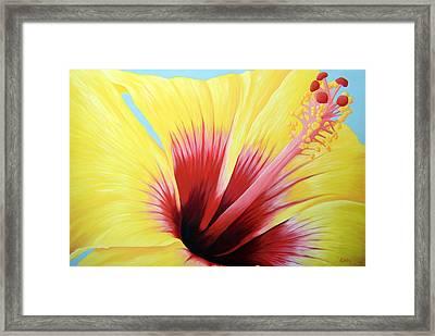 Yellow Hibiscus Framed Print by Adam Johnson