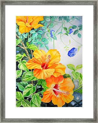 Yellow Hibiscus And Blue Clitoria Framed Print by Vishwajyoti Mohrhoff