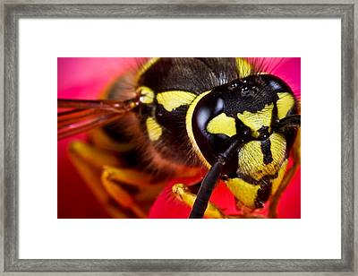 Yellow Jacket Framed Print by Ryan Kelly