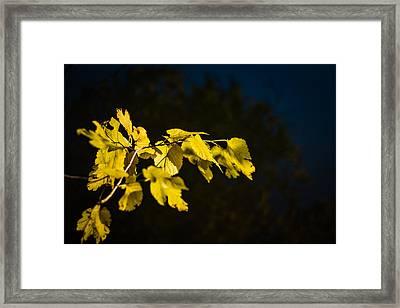 Yellow Leaves Framed Print by Randy Bayne