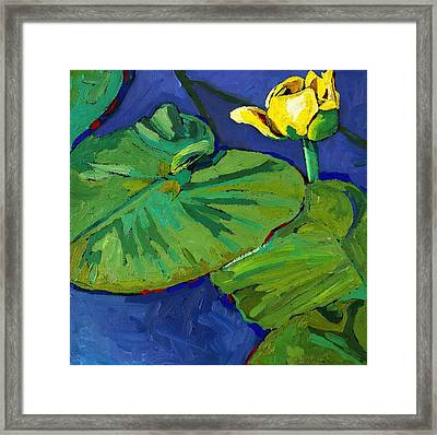 Yellow Lily Framed Print by Phil Chadwick