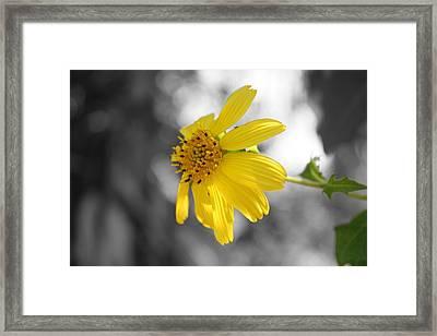 Yellow Framed Print by Mandy Shupp