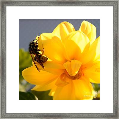 Yellow On Yellow Framed Print by Marjorie Imbeau