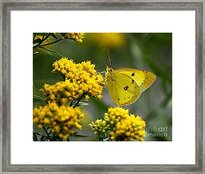 Yellow On Yellow Framed Print by Robert Pearson