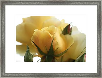 Organza Framed Print by Connie Handscomb